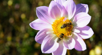 api su un fiore