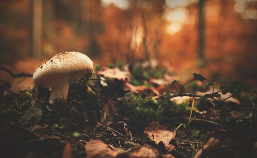 sottobosco, biodiversità