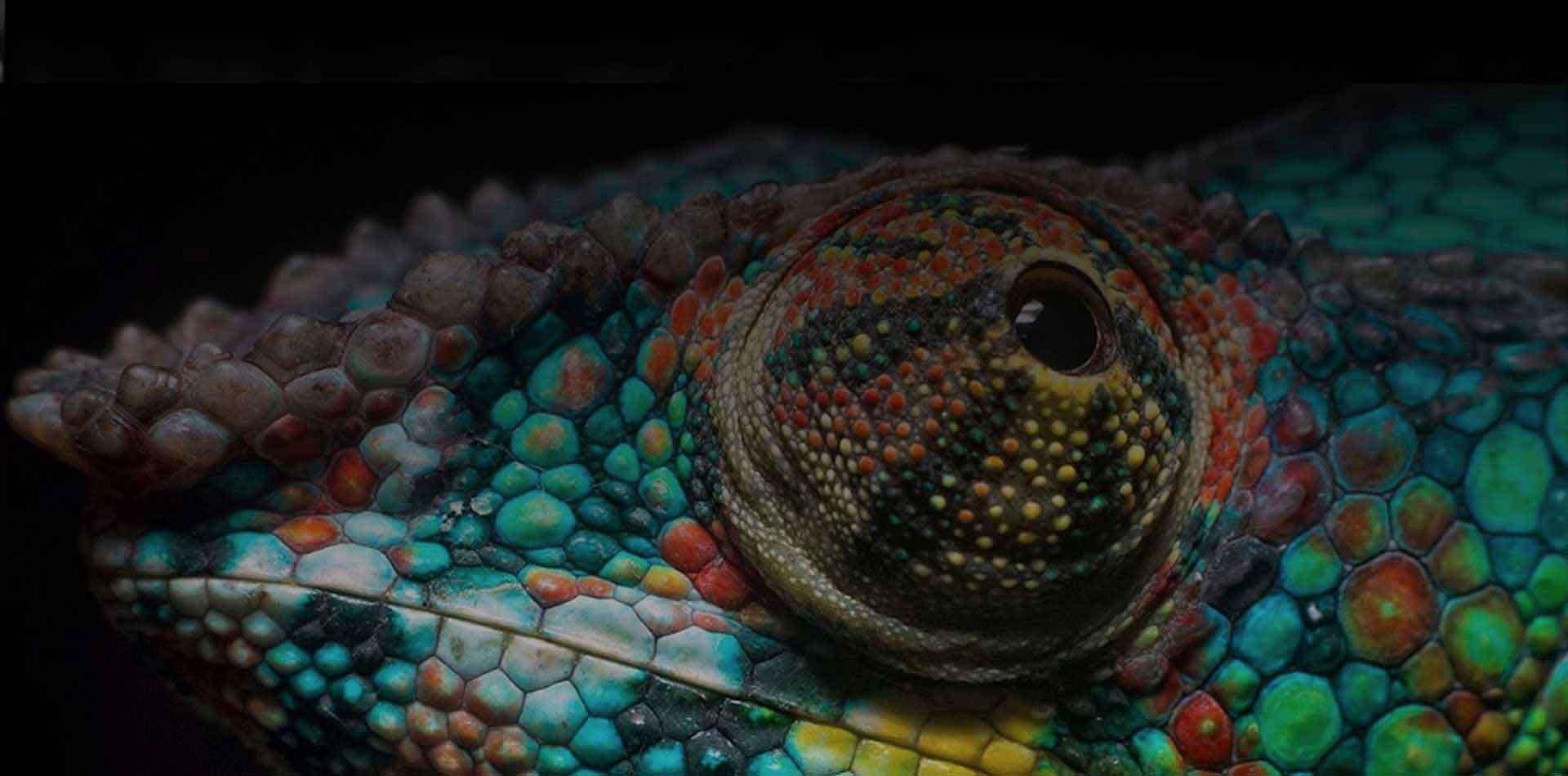World Biodiversity Association