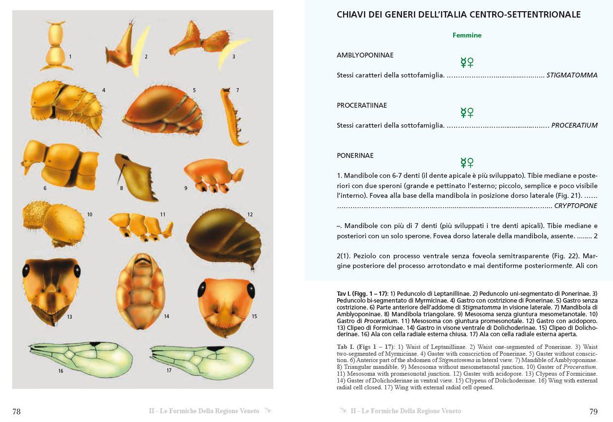 formiche veneto world biodversity association wba project ants
