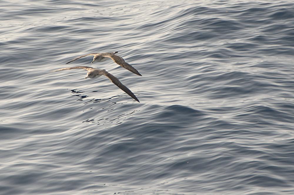 Berta maggiore Elba Biodiversità Arcipelago toscano WBA