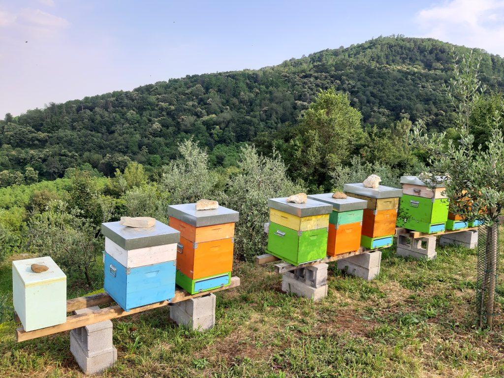 arnie e paesaggio: apicoltura e biodiversità