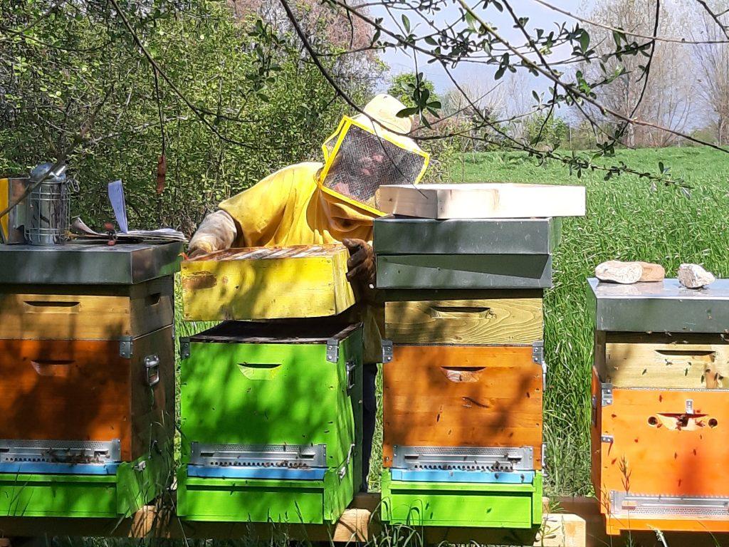 apicoltura e biodiversità